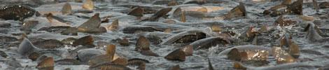 hurt ryb słodkowodnych